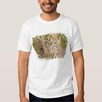 Cheetah, Acinonyx jubatus, with cub in the Masai T Shirt