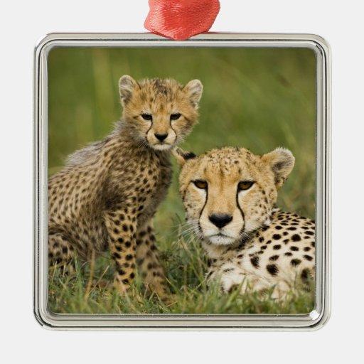 Cheetah, Acinonyx jubatus, with cub in the Metal Ornament