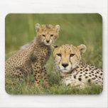 Cheetah, Acinonyx jubatus, with cub in the Mouse Pad