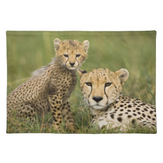 Cheetah, Acinonyx jubatus, with cub in the Place Mats