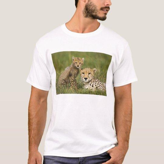 Cheetah, Acinonyx jubatus, with cub in the T-Shirt