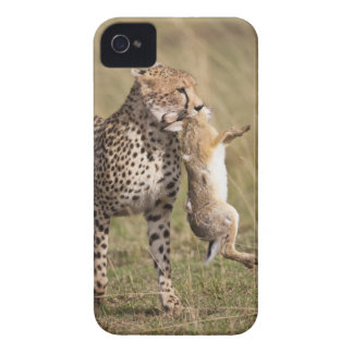 Cheetah (Acinonyx jubatus) with jackrabbit kill, iPhone 4 Cases