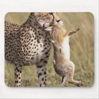 Cheetah (Acinonyx jubatus) with jackrabbit kill, Mouse Pad
