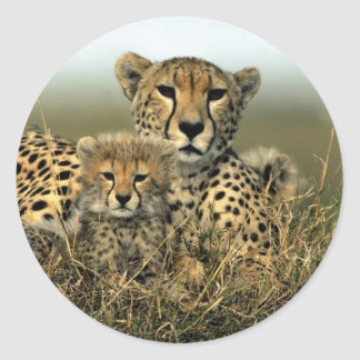 Cheetah and Cub Classic Round Sticker