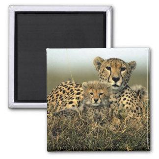 Cheetah and Cub Magnet