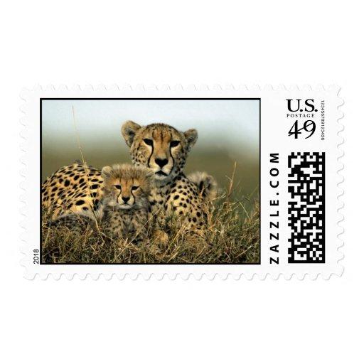 Cheetah and Cub Stamp