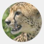 Cheetah Attack Stickers