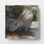cheetah-b-1 placa