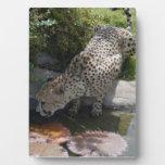 cheetah-b-1 placa de madera