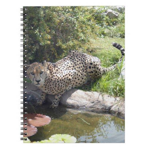 cheetah-b-2 cuadernos