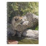 cheetah-b-3 notebook