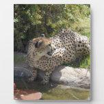 cheetah-b-3 placa para mostrar