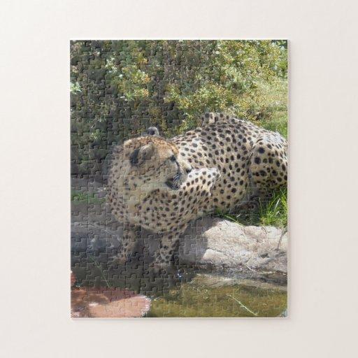 cheetah-b-3 puzzles