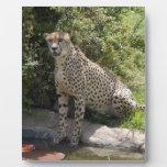cheetah-b-5 placa de plastico