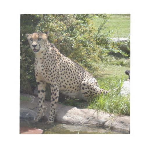 cheetah-b-5 scratch pad