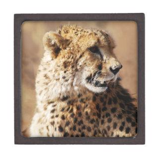 Cheetah beauty with fangs jewelry box