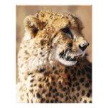 Cheetah beauty with fangs letterhead template