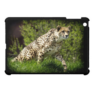 Cheetah, Big Cat,  African Wildlife, Nature iPad Mini Case
