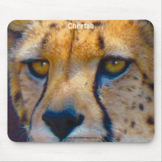 Cheetah Big Cat Wildlife Art Mousepad