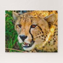 Cheetah Big Cats. Jigsaw Puzzle