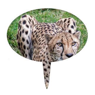 Cheetah Cake Picks
