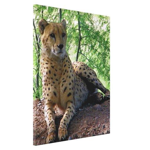 cheetah canvas