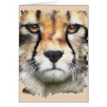 Cheetah Cards