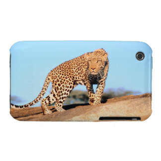 Cheetah Case-Mate iPhone 3 Cases