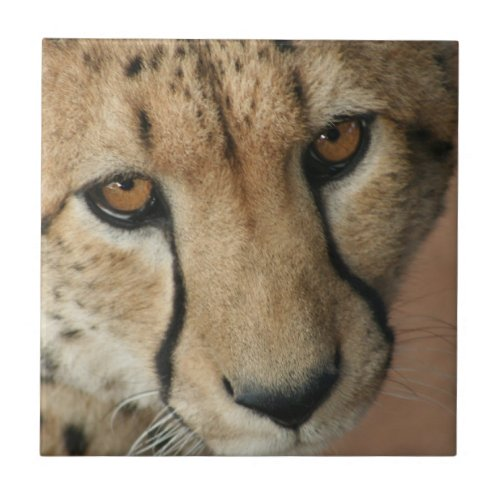 Cheetah Cat Tile