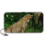 Cheetah Cat Zoo Park Pattern Colorful iPhone Speakers