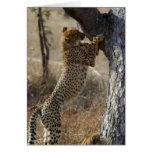 Cheetah Climbing On Tree Greeting Cards