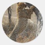 Cheetah Climbing On Tree Stickers