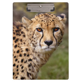 Cheetah Clipboard