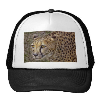 Cheetah Close-Up Ball Cap Trucker Hat