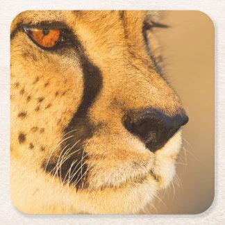 Cheetah Close-up of a female Square Paper Coaster