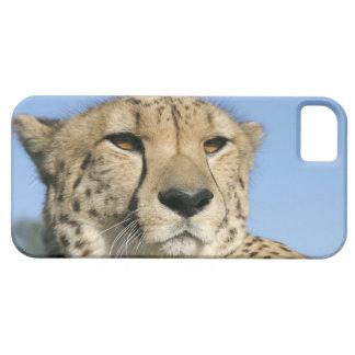 Cheetah Closeup iphone 5 case