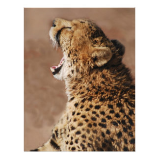 Cheetah could scare a lion flyer