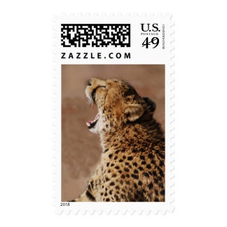 Cheetah could scare a lion postage stamp
