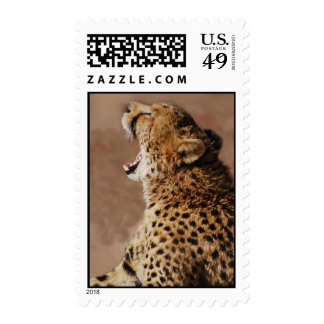 Cheetah could scare a lion postage