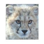cheetah-cub10x10 notepads