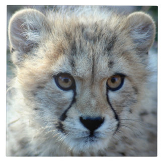 cheetah-cub10x10 tiles