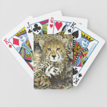 Cheetah Cub 2 Bicycle Playing Cards