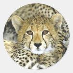 Cheetah Cub 2 Classic Round Sticker