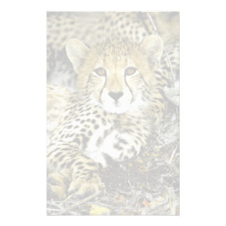Cheetah Cub 2 Stationery