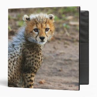 Cheetah Cub Acinonyx Jubatus) as seen in the Binder