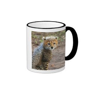Cheetah Cub Acinonyx Jubatus) as seen in the Coffee Mugs