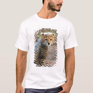 Cheetah Cub Acinonyx Jubatus) as seen in the T-Shirt
