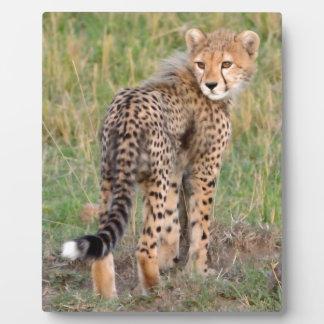 Cheetah Cub Looking Your Way. Plaque