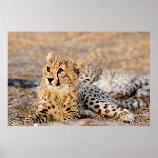 Cheetah Cub Print