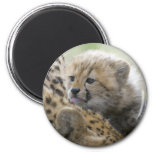Cheetah Cub with Mom Magnets